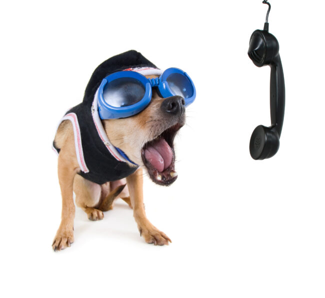 Barking Dog Phone